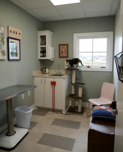 Cat-only Exam Room